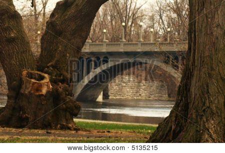 Trees framing a bridge