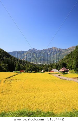 Japan Alps And Rice Field