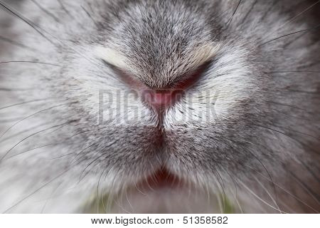 Rabbit mouth and nose abstract - macro photo poster