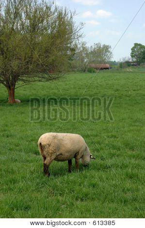 Heep In Field