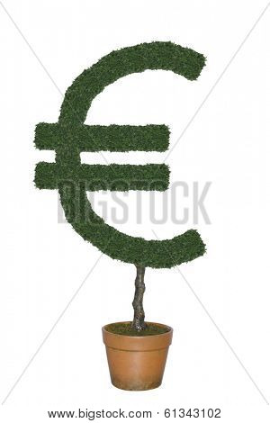 Topiary tree in shape of Euro currency symbol