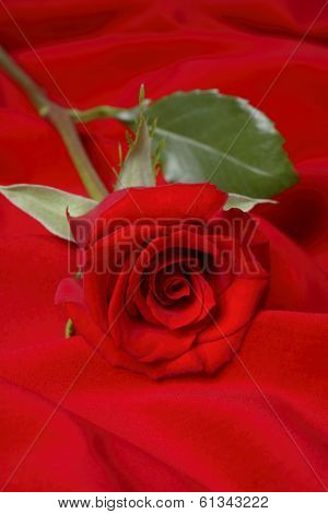 single red rose on red background
