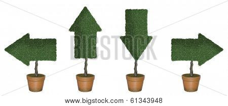 Four topiary trees in shape of arrows