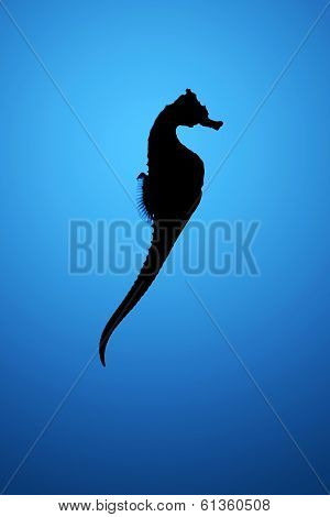 Silhouette of seahorse over blue water background poster