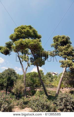 IV trees