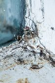 Nasty Housefly in a Dirty Window Frame Corner poster