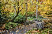 Fall trail at Botanical Gardens in Athens, Georgia, USA. poster