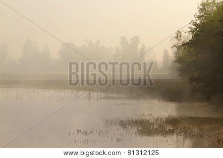 Misty Morning on a lake In Terai, Bardia, Nepal