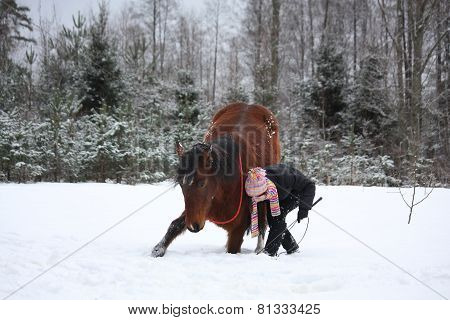 Teenager Girl Commanding Brown Horse To Bow