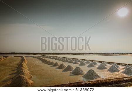 Salted Farm