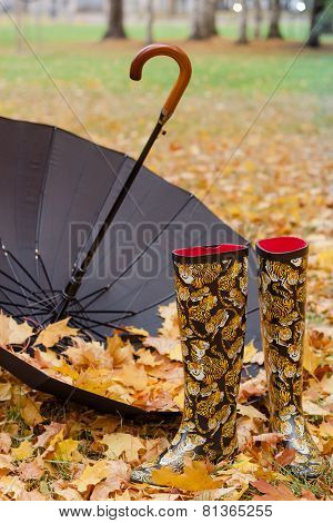 Rubber Boots And Umbrella In The Foliage