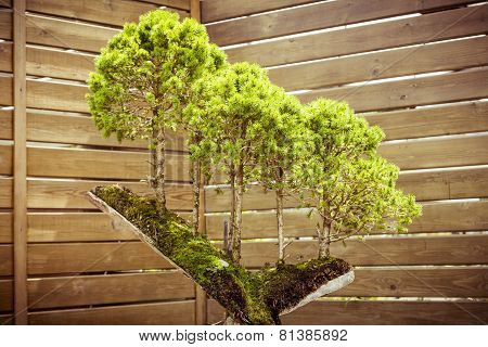 five bonsai trees on a tree stub poster