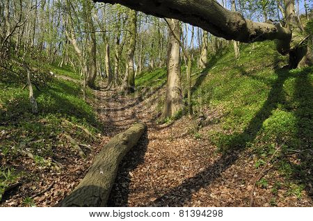Steep track in Cotswold ancient woodland Hollow Combe Dursley poster