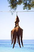 octopus hanging to dry on the beach in Paxos Greece. poster
