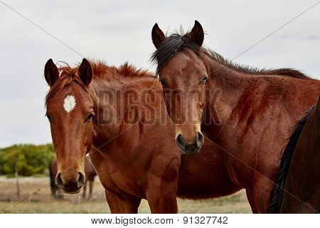 Foals In A Herd