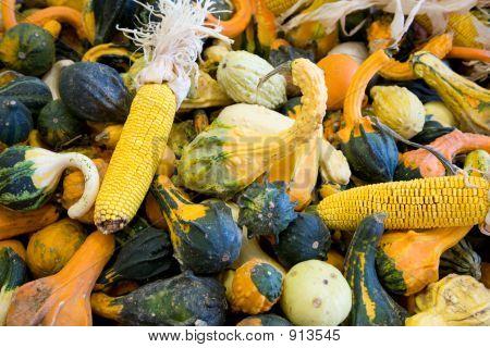 Gourds 3