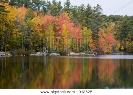 Foliage Reflected In Lake