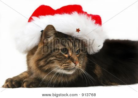 poster of cute cat with christmas bonnet in white background
