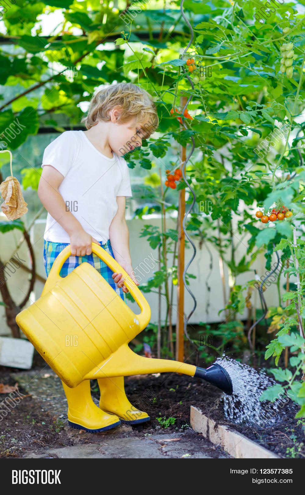 Adorable Little Kid Boy Watering Plants And Vegetables With Can In Greenhouse Garden Preschool