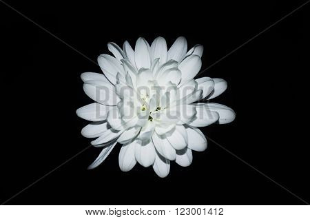 Large white Astra on a black background
