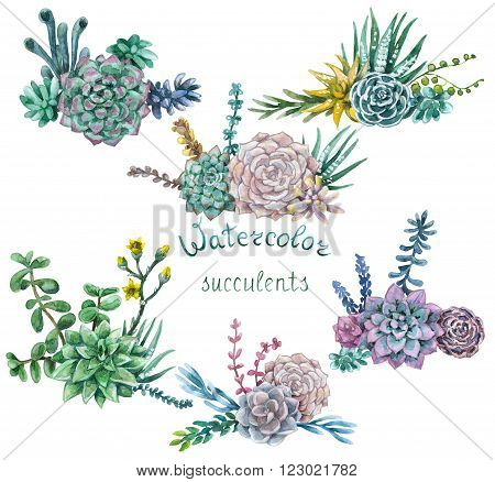 Hand drawn watercolor illustration. Floral elements for decoration. Set of various succulents bunches isolated on white.