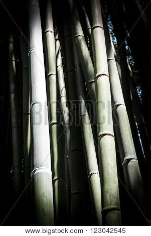 Bamboo sticks in an altered image, arty