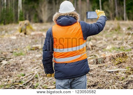 Forest inspector with tablet PC filmed clearcutting forest