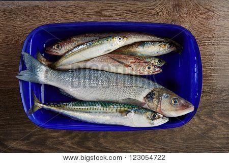 Fresh fishes mix hake seabass sardine mackerel anchovies
