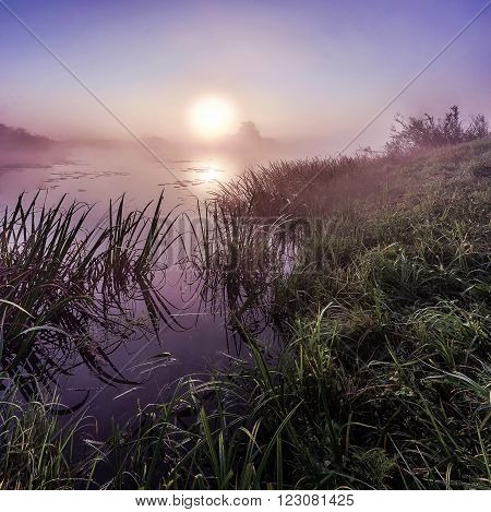 Sunrise over the Bayou wet morning, grass that grows on the waterfront
