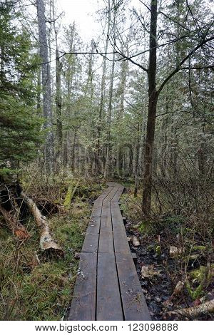 One may hike on a boardwalk through the Naas-Raunecker Nature Preserve in Harbor Springs, Michigan.