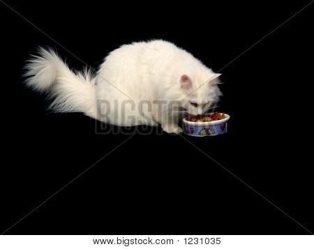 Angora Cat Eating Food