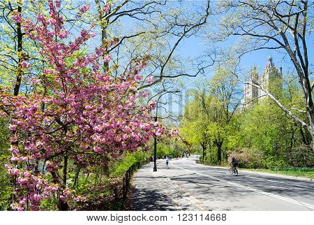 spring landscape in the Central park New York USA
