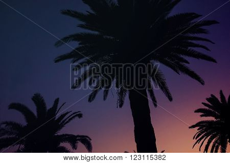 Dark Background with Sunset Sky and Palm Trees. Sillhouette Image.