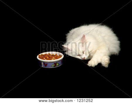 Angora Cat Sleeping