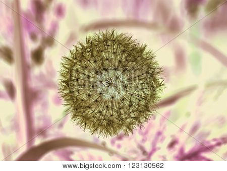 Nice dandelion in image of negative in lilla background