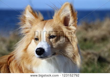 Portrait of a beautiful young male dog