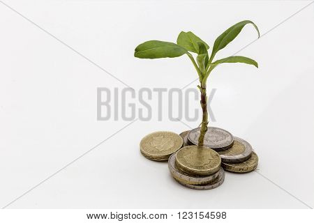 Showing a plant growing out of a pile of money symbolising investments and savings