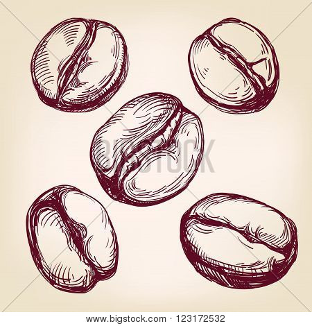 coffee beans set hand drawn vector llustration realistic sketch