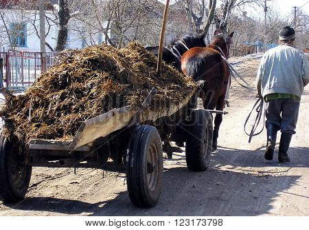 LUTSK, UKRAINE - 15 October 2010: The man is the village street near the horse-drawn cart from which pus