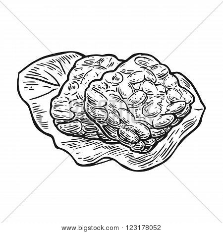Tempeh . Vector vintage engraved illustration isolated on white background.