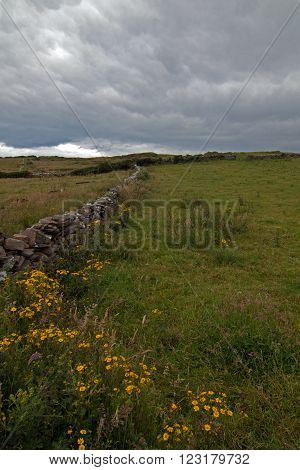 Stone fence in the pasture lands near the Cliffs of Moher in Ireland