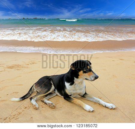 fanny dog rest on ocean beach