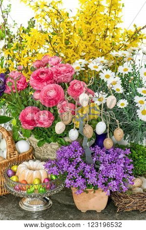 Easter decoration with flowers eggs and cake. Ranunculus campanula forsythia daisy