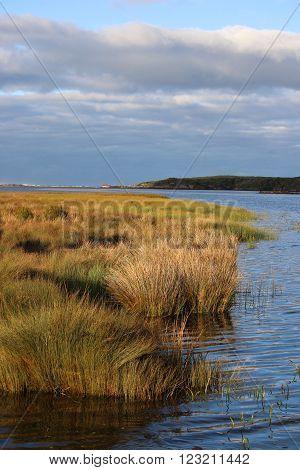 The Tarkine in Tasmania. A scene from the Pieman River and Pieman Heads coastal region of the Tarkine wilderness in Tasmania in February 2016.