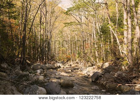 Forest thicket with a small stream and stones