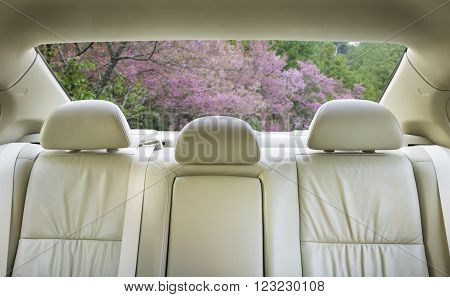 The view from the front overlooking the back seat of the car.
