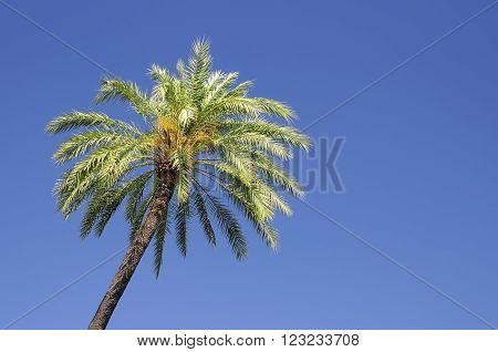 A palm tree isolated on the sky.
