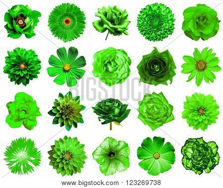Mix Collage Of Natural And Surreal Green Flowers 20 In 1: Peony, Dahlia, Primula, Aster, Daisy, Rose