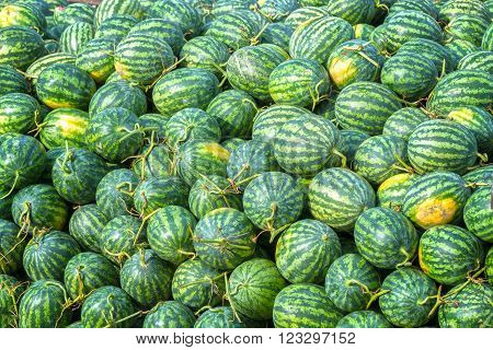 Watermelon, after harvest, with hundreds of watermelons were piled deep blue pending transportation going to market, this is a nutritious drink for everyone in summer