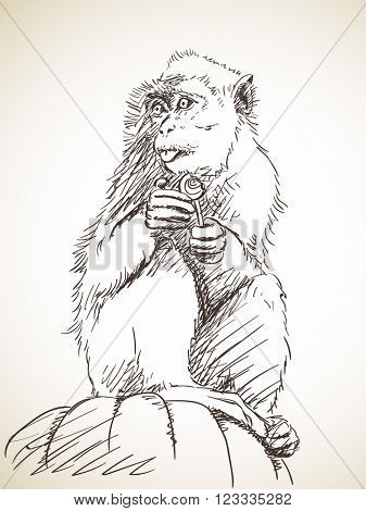 Sketch of monkey with candy on stick, Hand drawn illustration